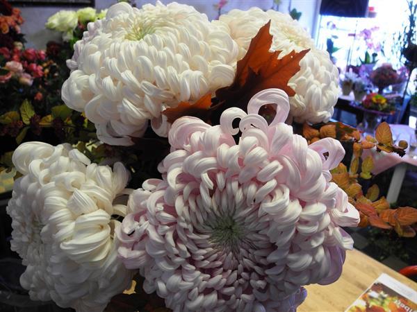 Herbst Chrysanthemen Gehoren Dazu Bluten Zauber Velbert